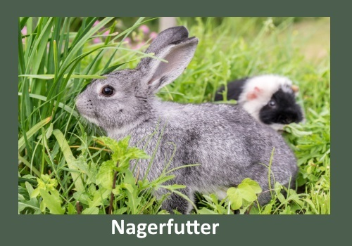 nagerfutter